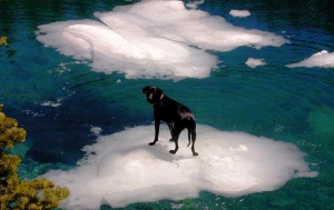 Carl on ice