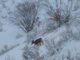 Hard winter for deer